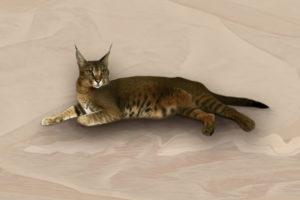 Die CaraCat Katze